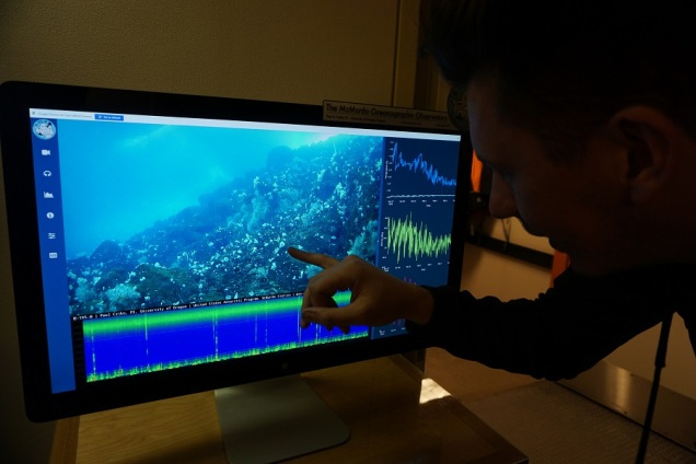 Tasman double-checking the underwater camera