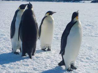 penguin2